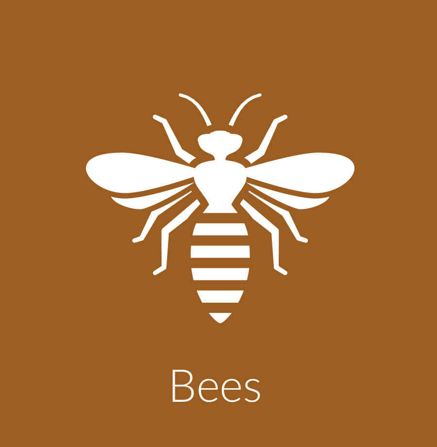 Bee Control including Wasps, Hornets & Yellow Jackets / Nest Removal