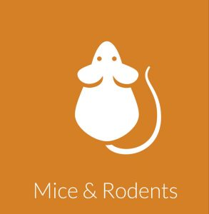 Mice Removal & Control Services