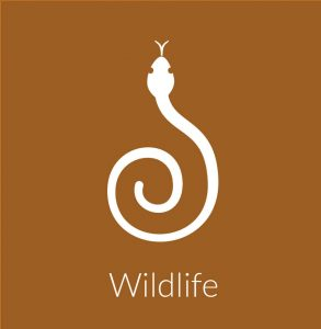 Wildlife Animal Removal & Control Services